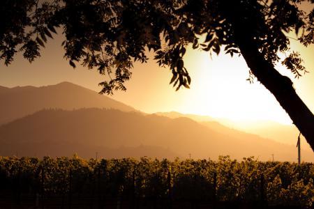 Обои горы, холмы, дерево, виноградники