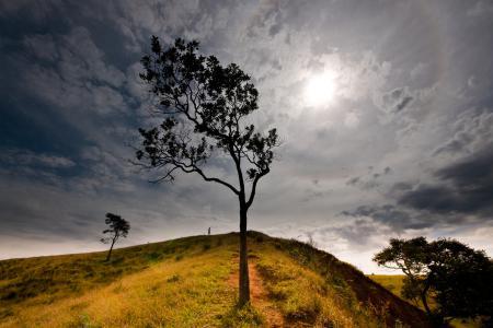 Фотографии природа, дерево, холм, небо