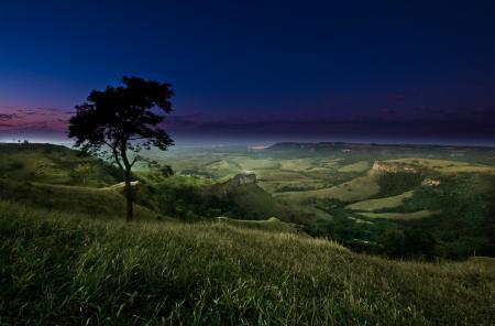 Картинки вечер, ночь, дерево