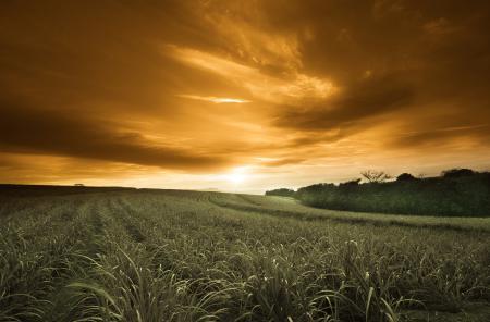 Заставки поле, небо, золотое