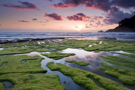 Обои море, небо, водоросли