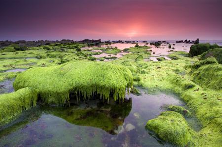 Фото небо, море, водоросли