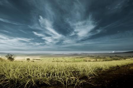 Обои небо, облака, поле
