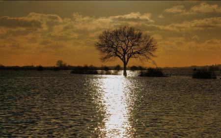Заставки дерево, вода, потоп, закат