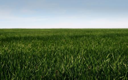 Заставки пейзажи, природа, макро, трава