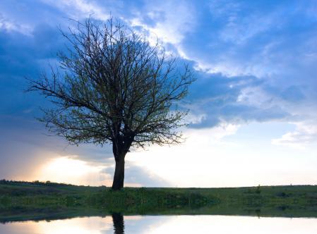 Фото Only tree, одинокое, дерево, небо