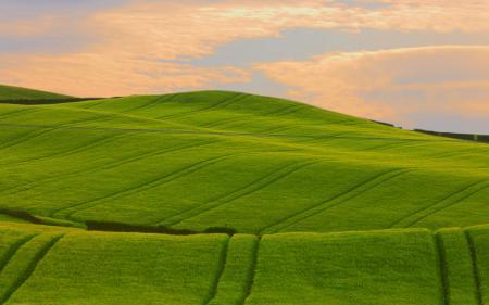 Картинки поля, поле, пейзажи, фото
