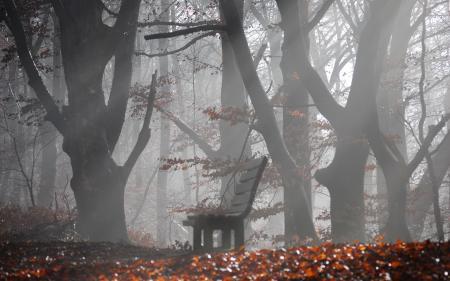Картинки туман, скамейка, деревья