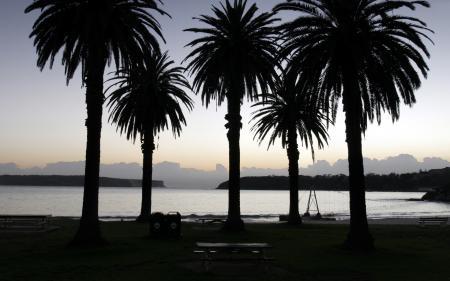 Картинки вечерние пейзажи, пальма, пальмы, дерево
