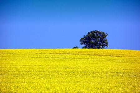 Фото природа, небо, поле, рапс