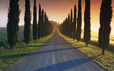 Заставки аллея, кипарисы, деревья, дорога