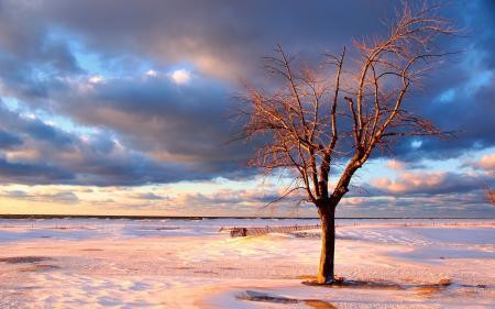 Обои пейзажи, дерево, деревья, море