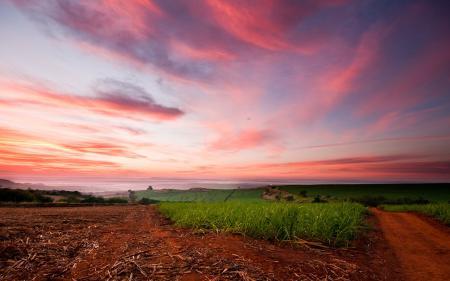 Обои поле, небо, розовое