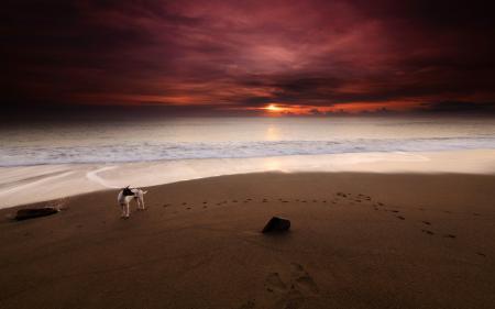 Заставки море, собака, пляж, закат