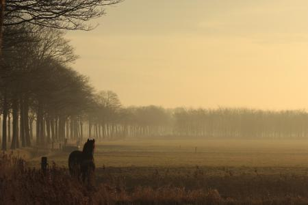 Заставки вечер, конь, природа, пейзаж