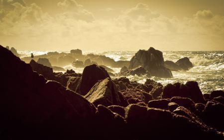 Обои пейзажи, Monterey, чайка, чайки