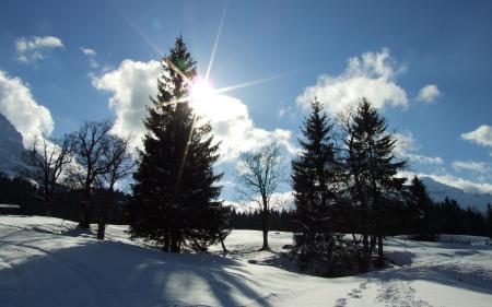 Заставки солнце, небо, ёлки, снег