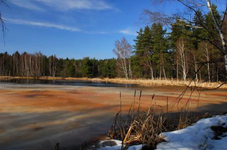 Фото озеро, деревья, природа, пейзаж