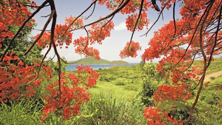 Обои природа, дерево, ветки, листья