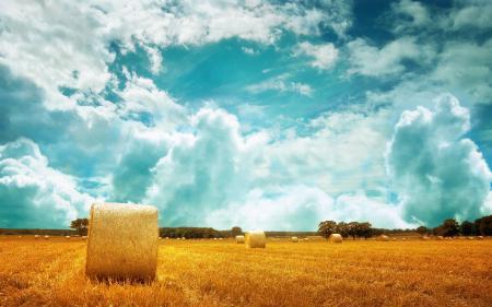 Заставки Пейзаж, природа, поле, пшеница