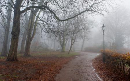 Фотографии осень, парк, туман