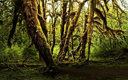 Фотографии Лес, деревья, туман, мох
