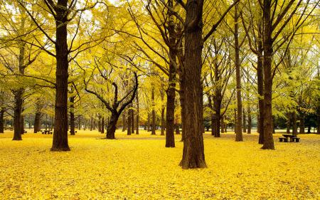 Картинки парк, деревья, листья, осень