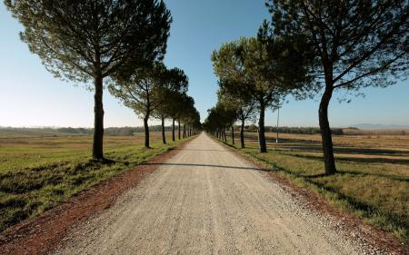 Фотографии лето, поле, дорога, деревья