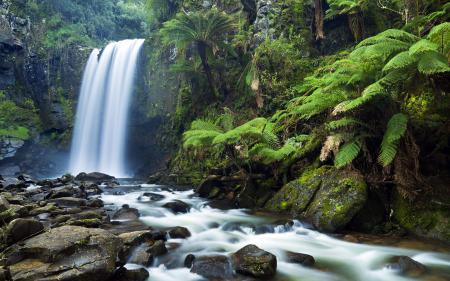 Заставки природа, лес, джунгли, деревья