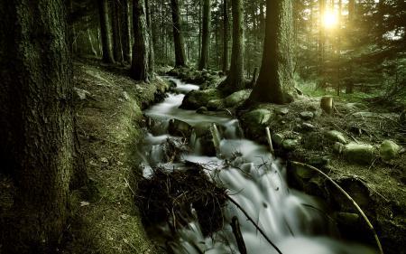 Фотографии лес, деревья, ручей