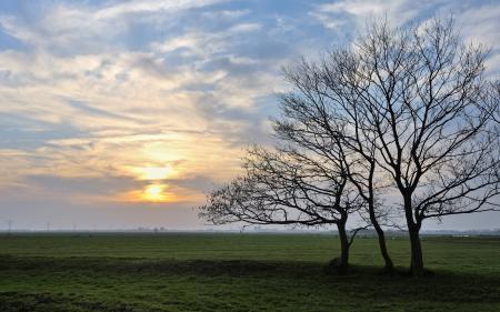 Фото поле, дерево, небо