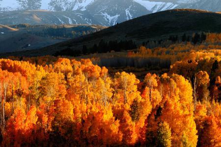 Фото лес, осень, горы