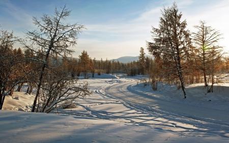 Фотографии зима, деревья, дорога