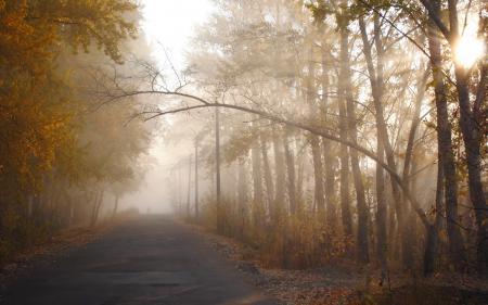 Картинки осень, дорога, туман, деревья
