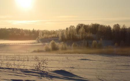 Фотографии поле, зима, снег