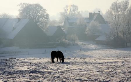 Обои зима, конь, дома, снег