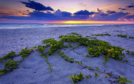 Фото закат, море, песок, растения