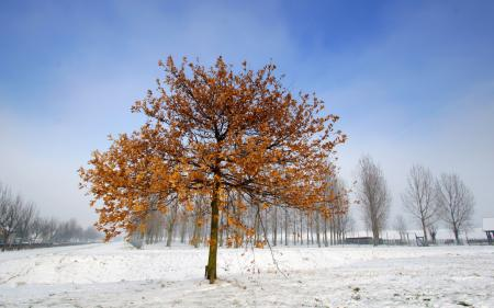 Заставки зима, поле, дерево