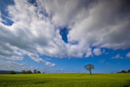 Картинки поле, дерево, небо, пейзаж