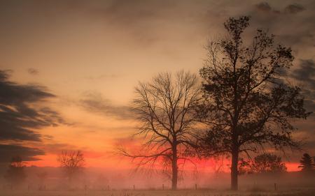 Обои закат, деревья, небо, пейзаж