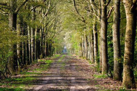 Заставки дорога, деревья, пейзаж
