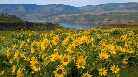 Картинки река, горы, цветы, природа