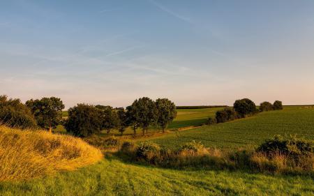 Фото поле, лето, природа, пейзаж