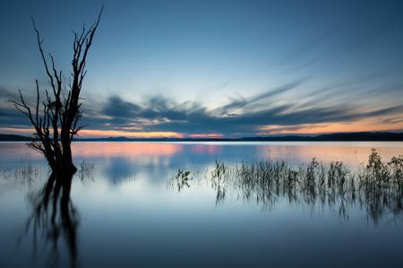 Обои дерево, озеро, облака, вечер