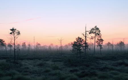 Картинки утро, лес, туман, природа