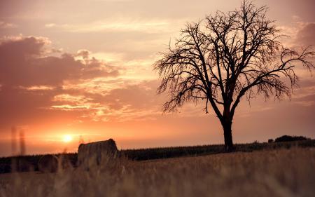 Заставки поле, жнивьё, дерево, закат