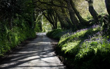 Фото дорога, парк, природа