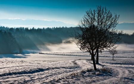Фото поле, туман, дерево, природа