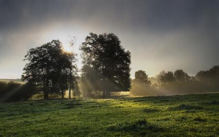 Фотографии поляна, трава, деревья, листва