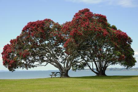 Обои деревья, цветущие, лавочка, стол